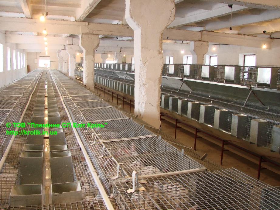 Продаются скороспелые кролики с хорошим иммунитетом породы Термонская белая, Калифорнийская, HYLA Krolik-ukr-002