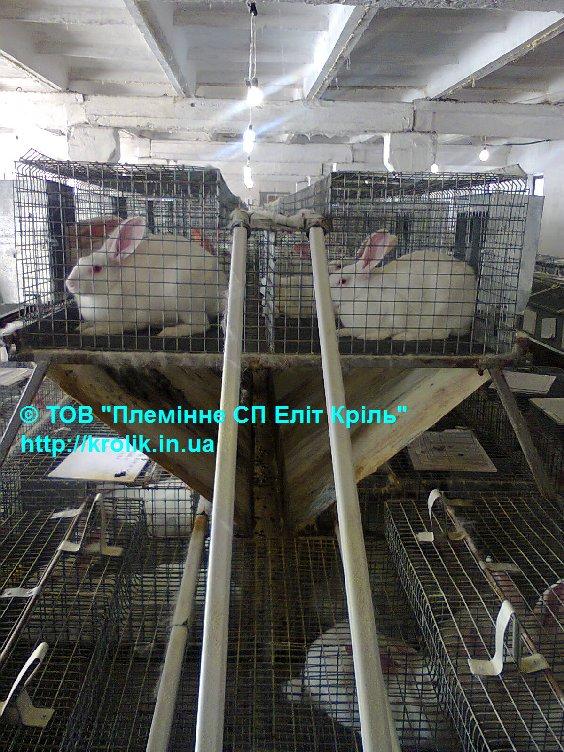 Стоимость выращивания кроликов 50