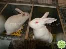 Кролики, сетка ООО